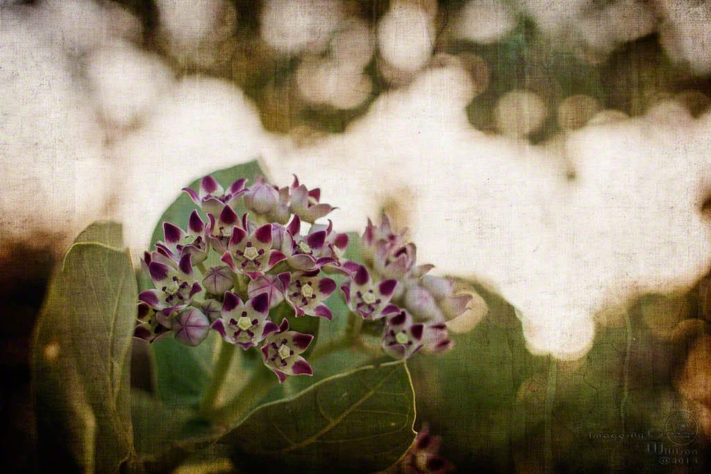 Flowers, bokeh & a texture