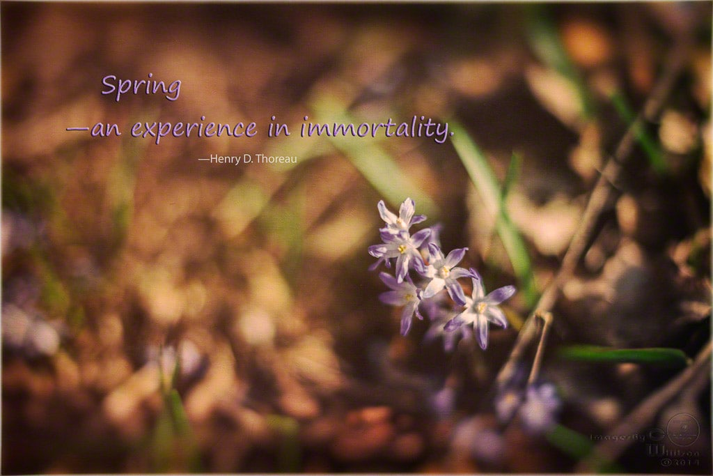 spring, flower, typography, quote