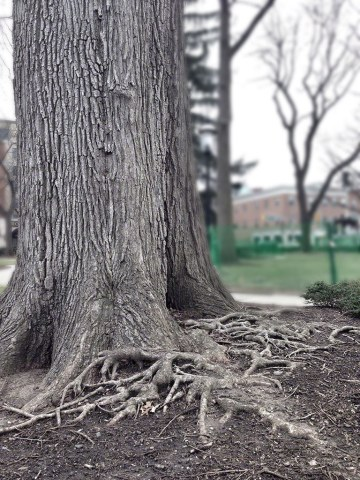 tree, roots, iphone