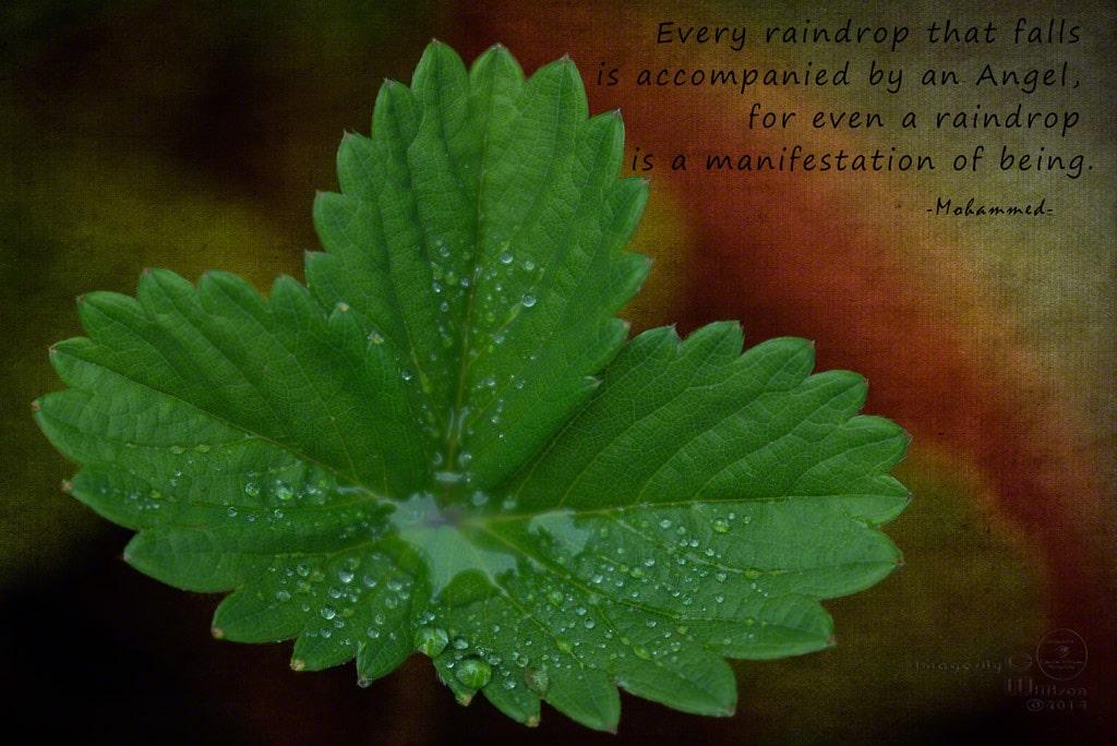 Angels & Raindrops