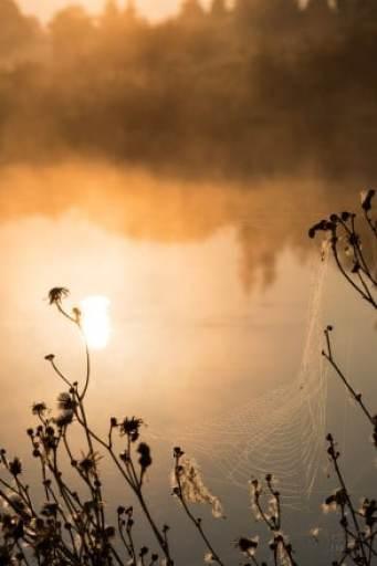 Reflections & a web