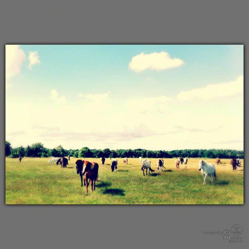 icelandic, horses, instagram