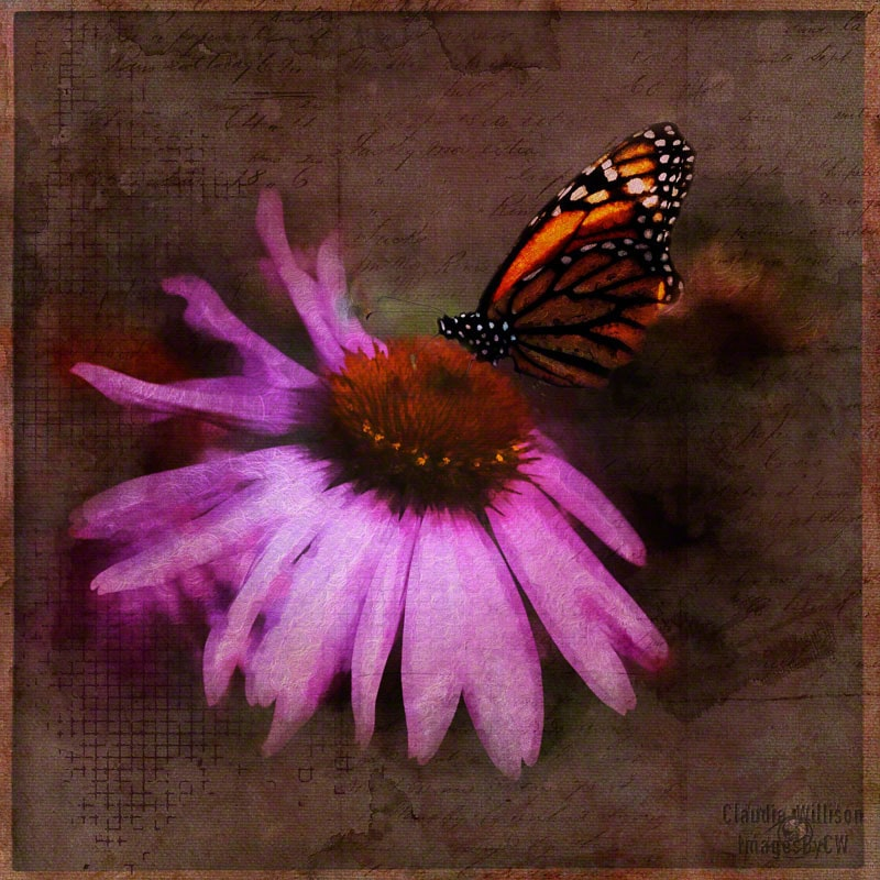 flower, butterfly, spring, purple, grunge