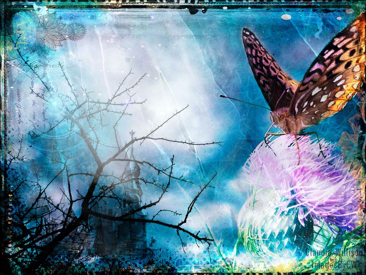 photoshop, composite, butterfly, fantasy