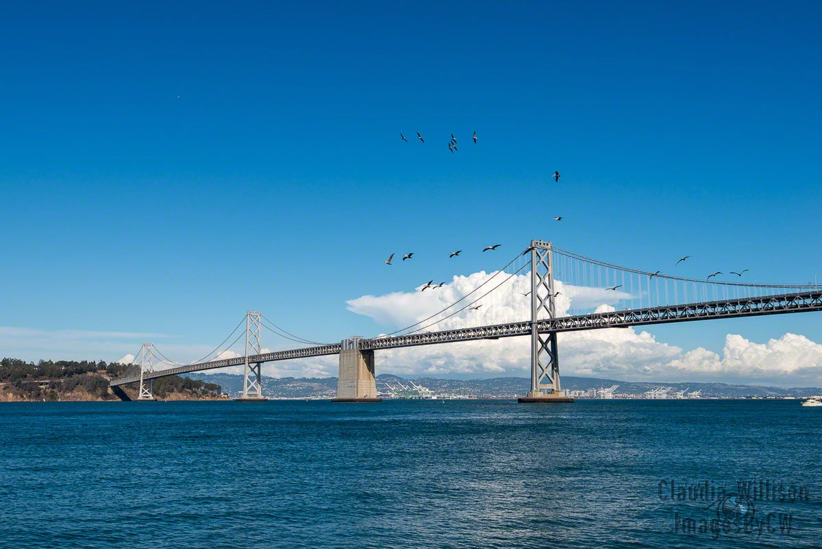 San Francisco, Bay Bridge, Pelicans