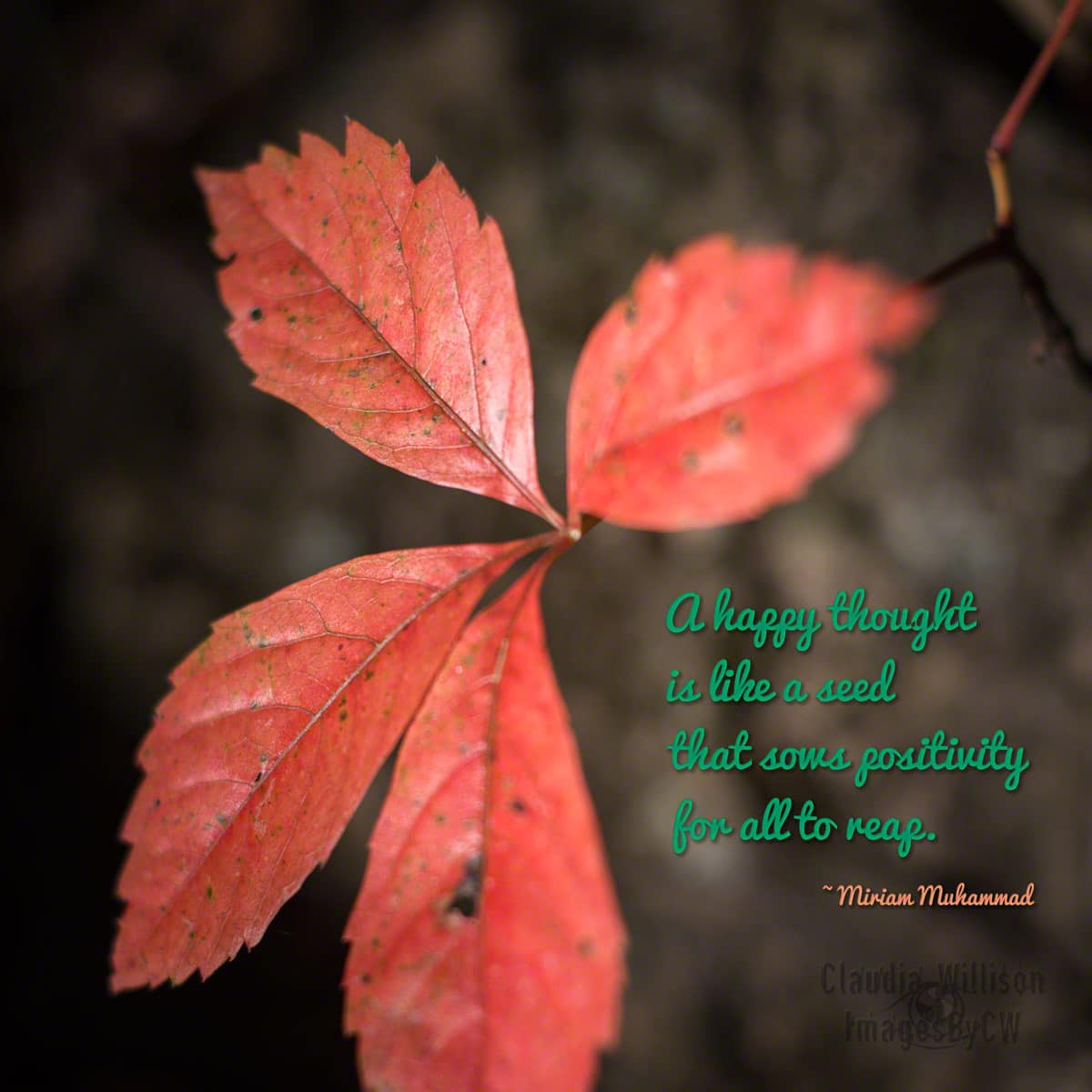 leaf, red, positive, quote