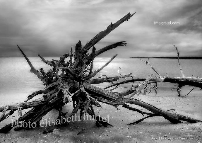 Photographie d'art en noir et blanc