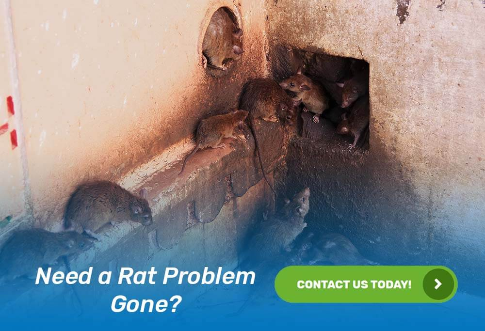 rodent-control