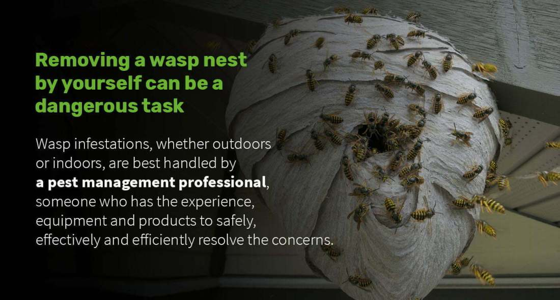 wasps-control-2