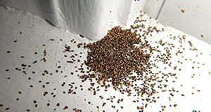 termite_droppings