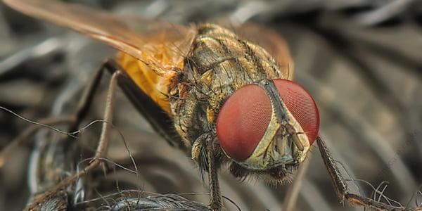 get-rid-of-houseflies
