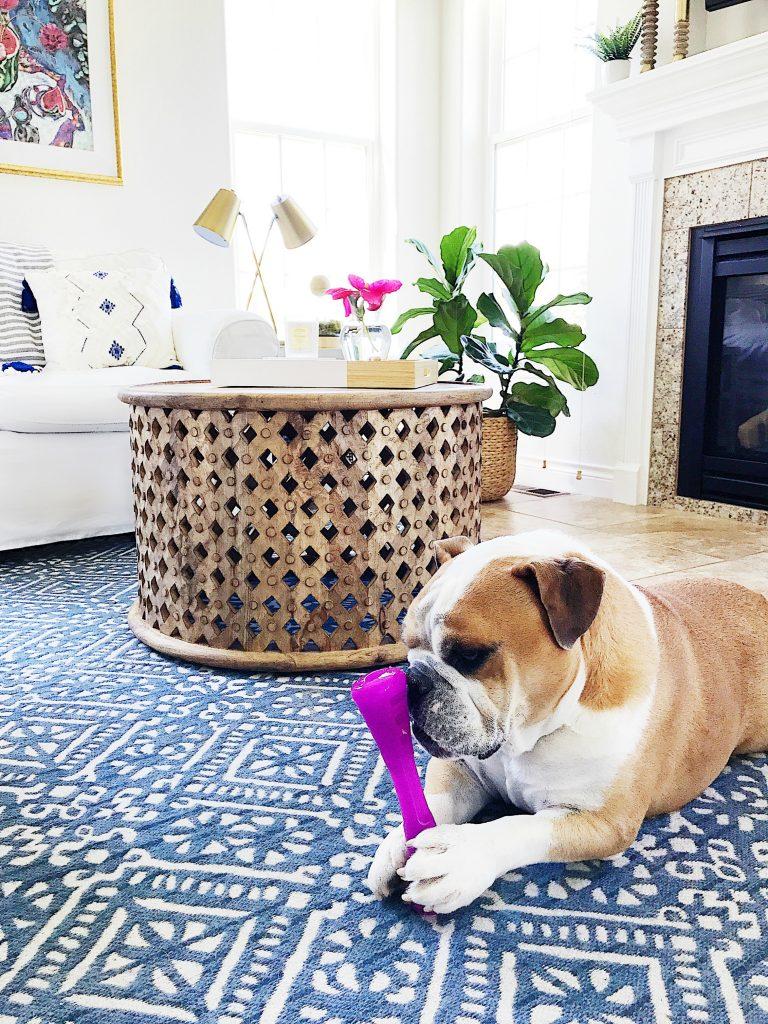 Baxter, our English Bulldog
