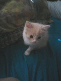 Baby Bailey!