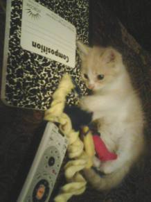 Another pic of Bailey as a kitten!