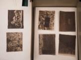 calótipos secando em papel mata borrão.