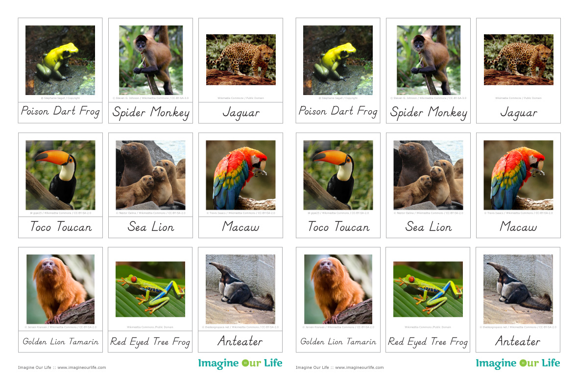 Animals Of South America For The Montessori Wall Map