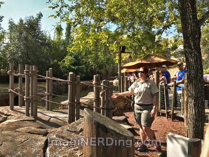 Busch gardens cheetah