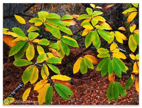 Outono Serra  do  Caurel, Comprar fotografía de Galicia Serra  do  Caurel Outono Decoración natureza