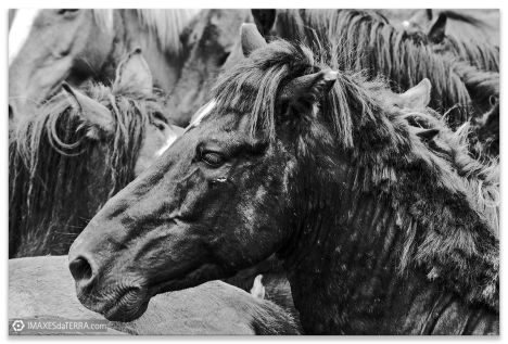 Comprar fotografía Fiestas de Galicia Rapa das Bestas Decoración naturaleza