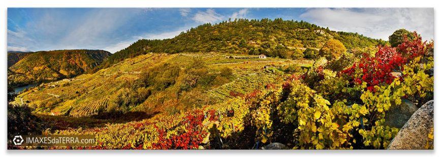 Viñas Ribeira Sacra, Comprar fotografía Galicia Naturaleza Gallega Ribeira Sacra Viñedos Decoración Paisaxes