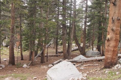 McClure Meadows campsite.