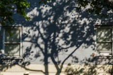 Friday Morning - Tree shadows
