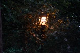 Tuesday - Lamp