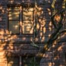 Tuesday - Tree shadows