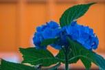 Thursday - Blue, green orange