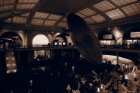 Sunday - Hall of Ocean Life, American Natural History Musuem