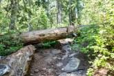 Blowdown on the trail