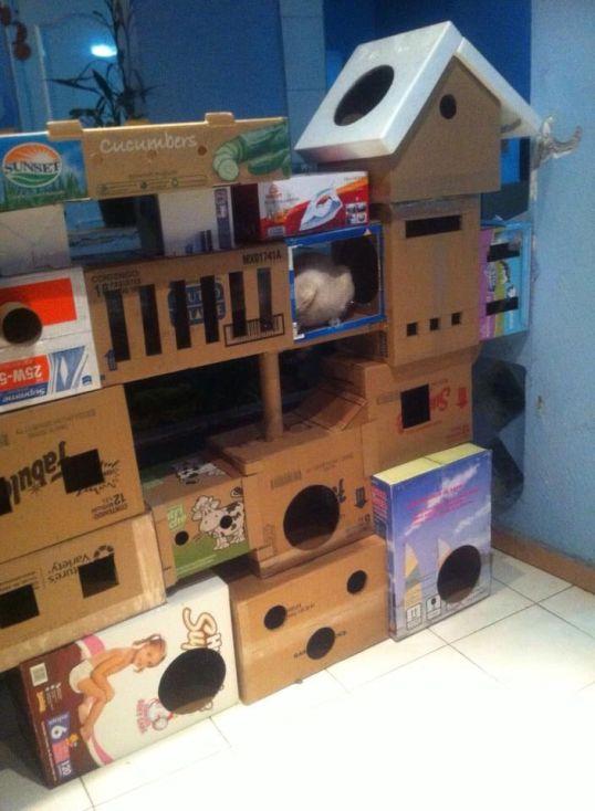 19 Ideas DIY habitación para gatos (3)