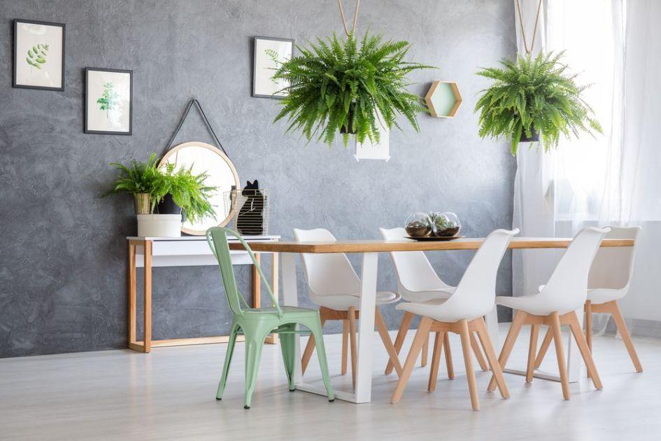 decoración con planta helecho