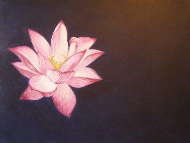 Lotus - Meditate on a Flower