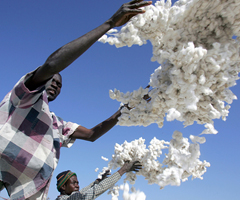 Cotton harvest in Burkina Faso: Prices for commodities from developing countries slumped in the early 1980s because of recessions in industrial countries (photo: Issouf Sanogo/AAFP)