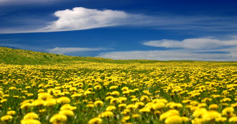 Pictures of yellow flowers landscape djiwallpaper yellow landscape flowers gallery flower decoration ideas mightylinksfo
