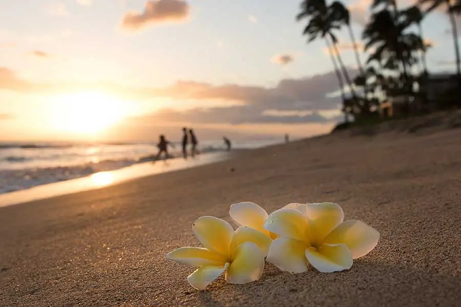 Hawaii Safe Travels Program