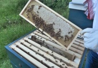 Een raampje honing!