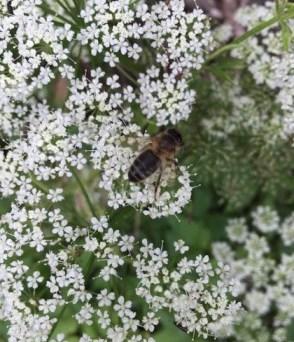 Honing halen, van wie zou ze zijn?