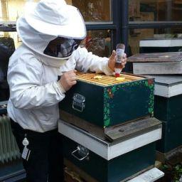 Hive Clean behandeling