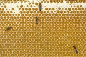 Honig machen