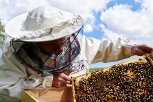Schwarmstimmung verhindern durch Brutwaben umhängen, Schwarmstimmung verhindern durch Ammenbienen entnehmen