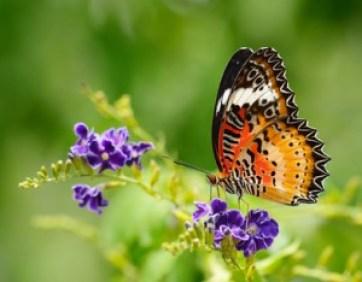 Bienenweidekatalog schützt Schmetterlinge und Bienen