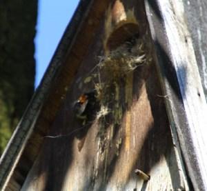 Baum Hummel Nest