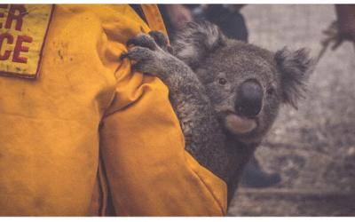 Evento «Juntos por el Planeta». Cuenta-cuentos, talleres y sorteo solidario en favor de Australia