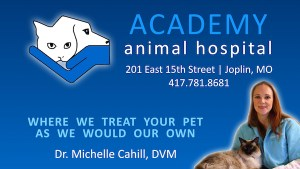 academy animal hospital joplin missouri michele cahill