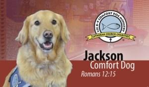 Jackson Comfort Dog business card