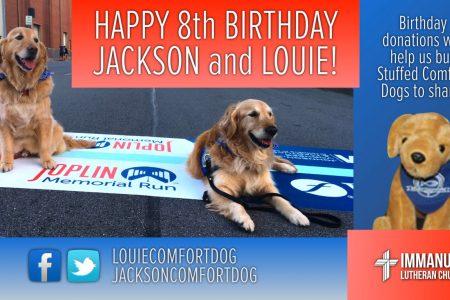 louie comfort dog jackson comfort dog immanuel lutheran church martin luther school joplin missouri 8th birthday