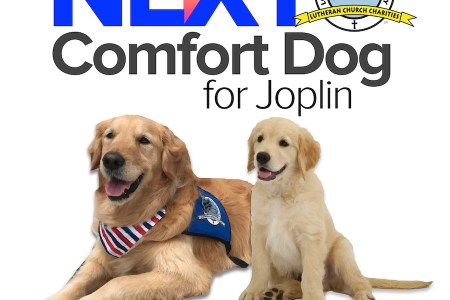 Plans For Joplin's Next Comfort Dog 8