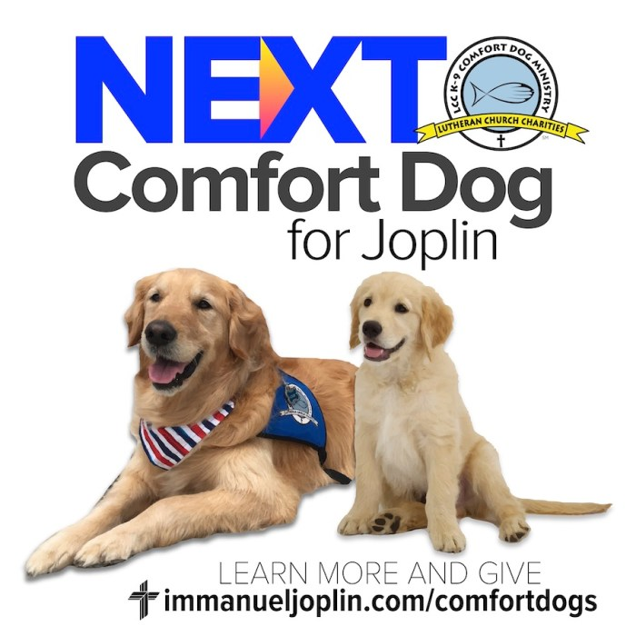 Fundraising Nearly Complete For Joplin's Next Comfort Dog 4